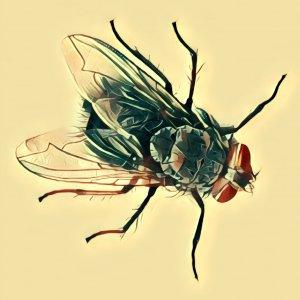Traumdeutung Fliege