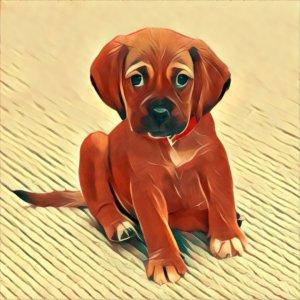 Traumdeutung Hund