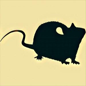 Traumdeutung Ratte