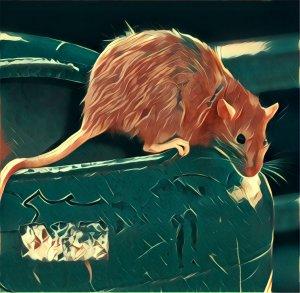 Ratte traumsymbol mit video traum deutung - Traumdeutung badezimmer ...