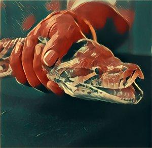 Traumdeutung Schlange Tipps Um Traume Von Schlangen Zu Deuten