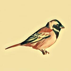 Traumdeutung Vogel