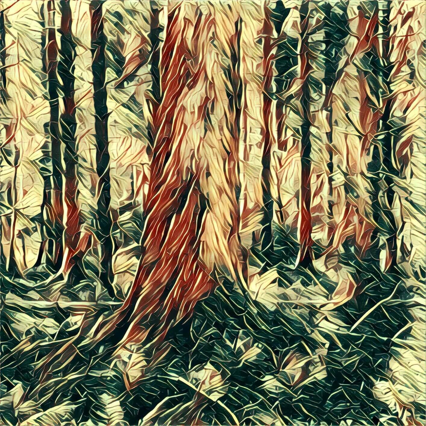 Wald - Traum-Deutung
