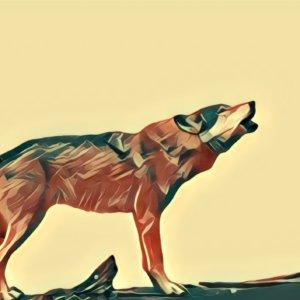 Traumdeutung Wolf