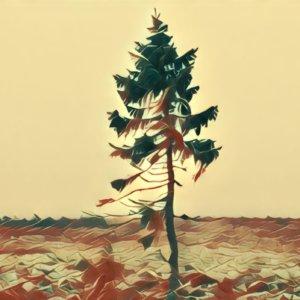 Traumdeutung Baum
