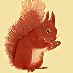Traumdeutung Eichhörnchen