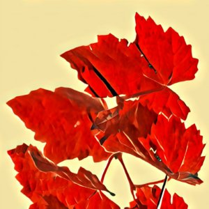 Traumdeutung Herbst