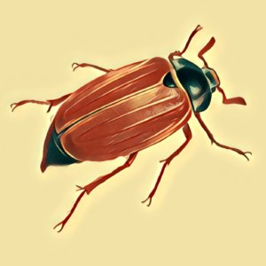 Käfer Traum Deutung