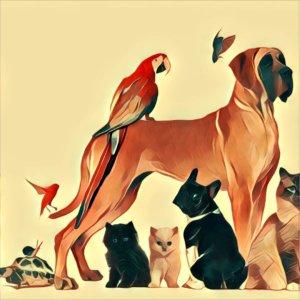 Traumdeutung Haustier