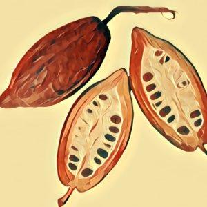 Traumdeutung Kakao