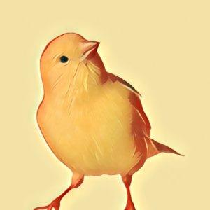 Traumdeutung Kanarienvogel