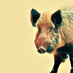 Traumdeutung Wildschwein