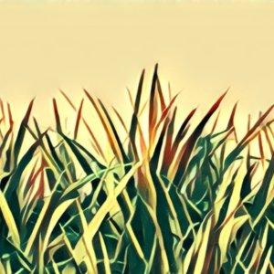 Traumdeutung Gras
