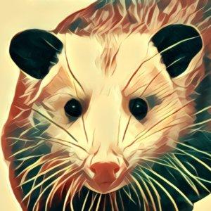 Traumdeutung Opossum