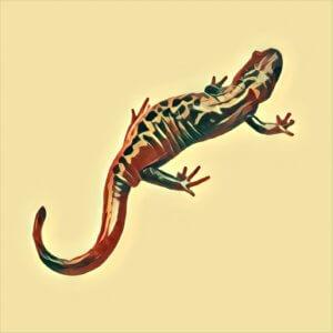 Traumdeutung Salamander