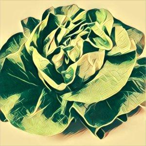 Traumdeutung Salat