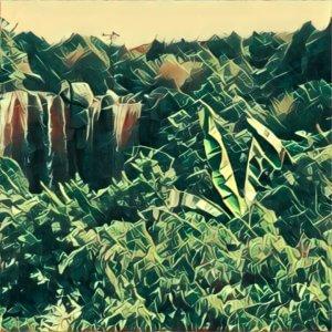 Traumdeutung Dschungel