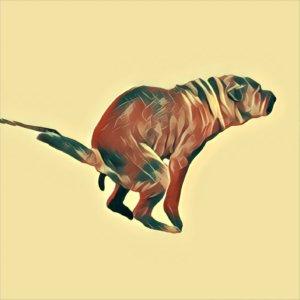 Traumdeutung Hundekot