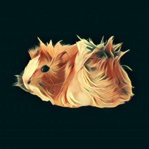 Traumdeutung Meerschweinchen