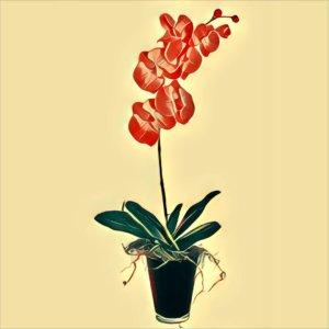 Traumdeutung Orchidee