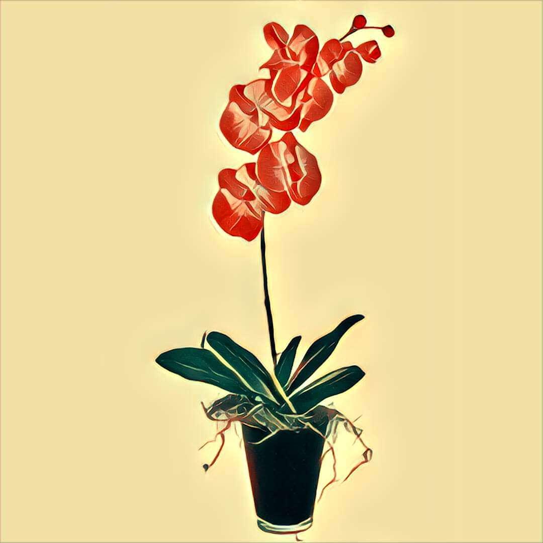 symbol orchidee