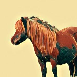 Traumdeutung Pony