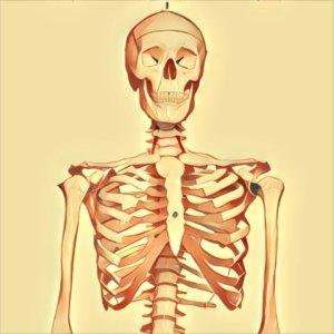 Traumdeutung Skelett