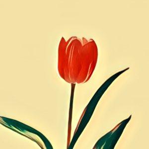 Traumdeutung Tulpen