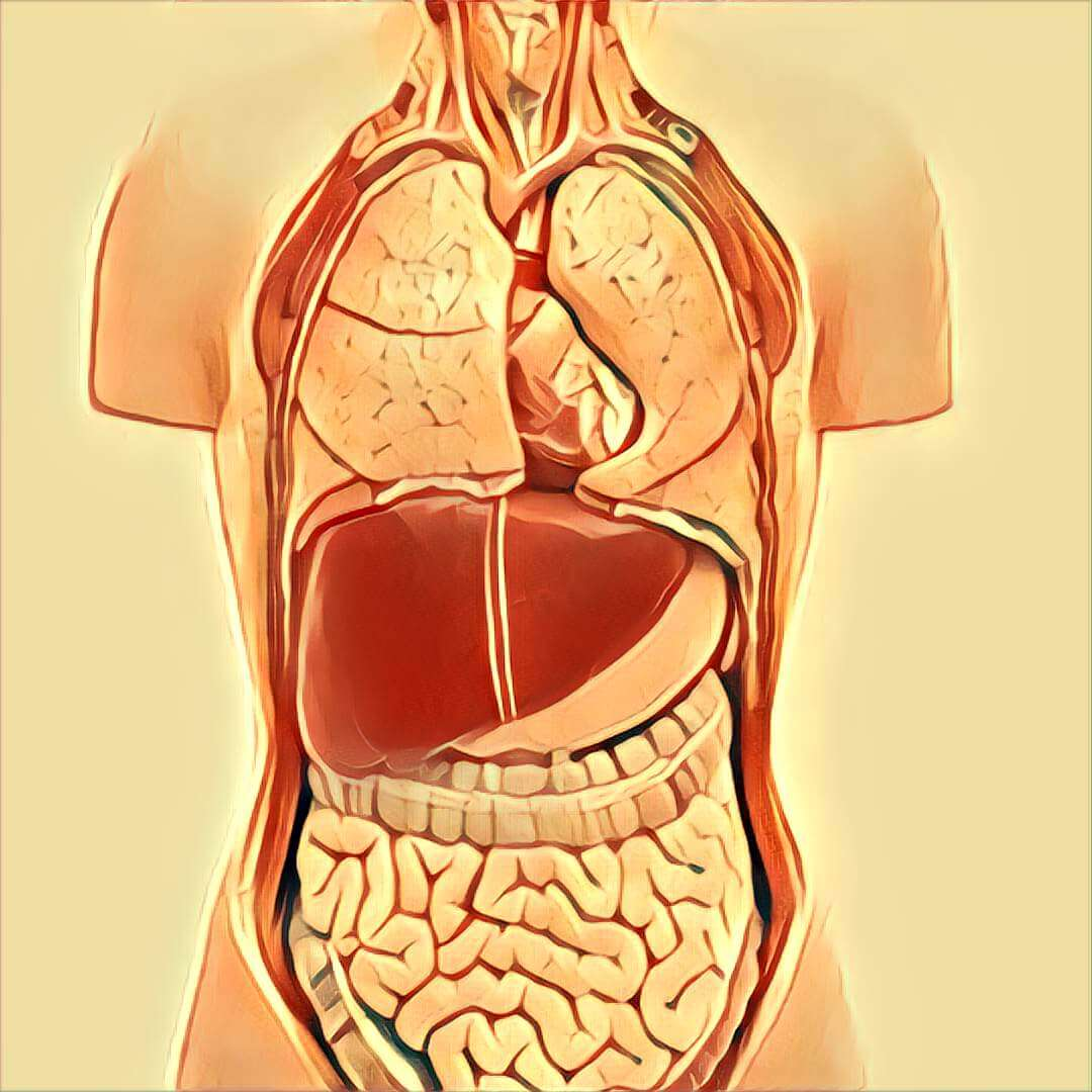 Organe - Traum-Deutung