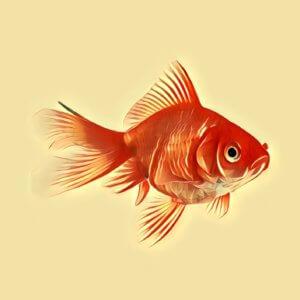 Traumdeutung Goldfisch