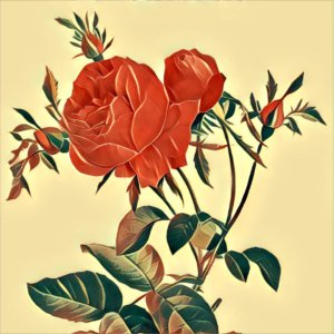 Traumdeutung Rose
