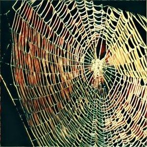 Traumdeutung Spinnennetz