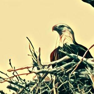 Traumdeutung Nest