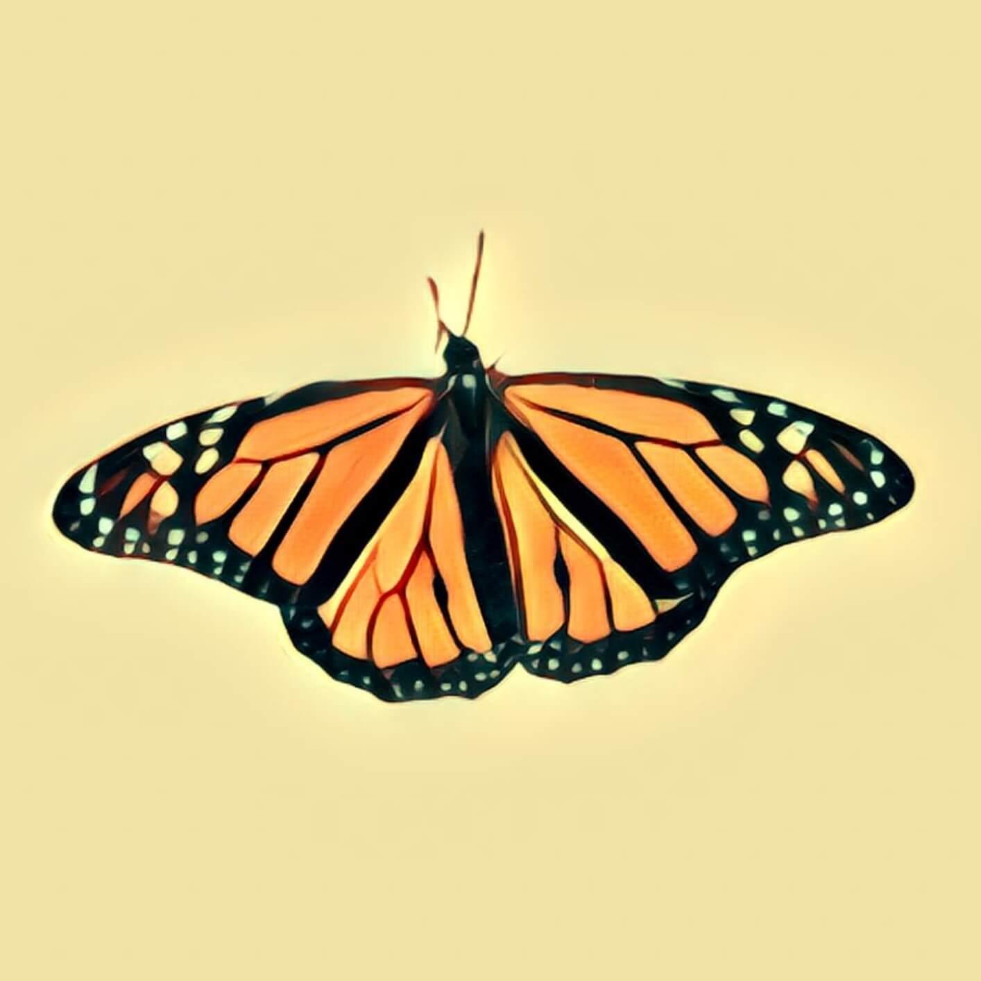 Bedeutet schmetterling was 🦋 Schmetterling