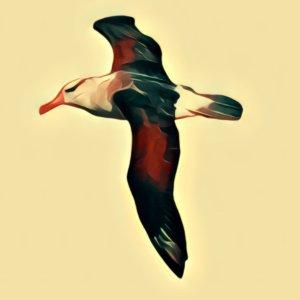 Traumdeutung Albatros