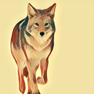 Traumdeutung Kojote