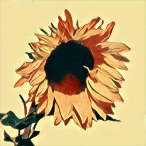 Traumdeutung Sonnenblume