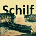 Schilf