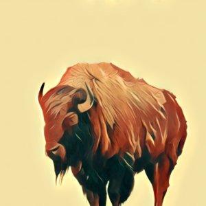 Traumdeutung Bison