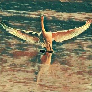 Traumdeutung Landung