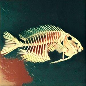 Traumdeutung Fischgräten