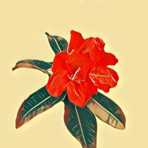 Traumdeutung Rhododendron