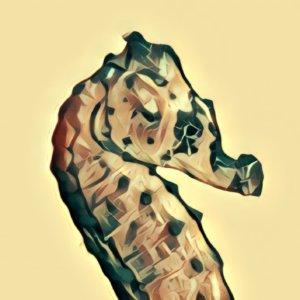 Traumdeutung Seepferdchen