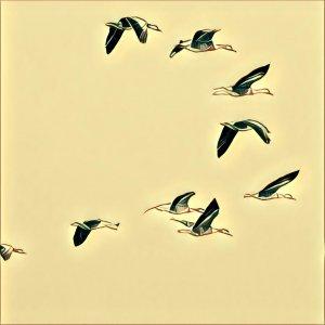 Traumdeutung Vogelschwarm
