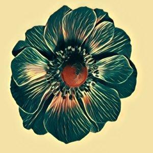 Traumdeutung Anemone