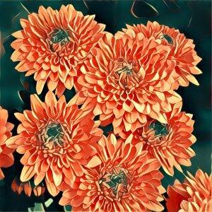 Traumdeutung Chrysanthemen