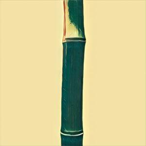 Traumdeutung Bambus