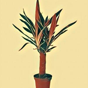 Traumdeutung Yucca-Palme