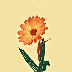 Traumdeutung Ringelblumen