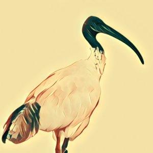Traumdeutung Ibis